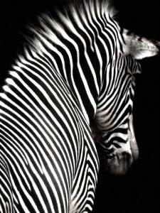 black_white 011