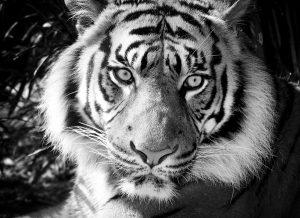 black_white 024