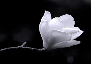 black_white 026