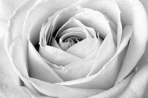 black_white 029