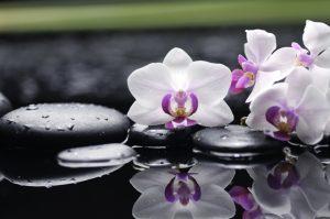 flowers 058
