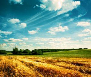 landscape 035